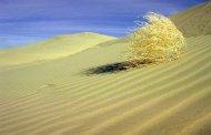 Самые необычные пустыни в мире