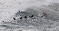 Дельфины серферы