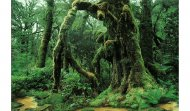 Обитатели Амазонских джунглей